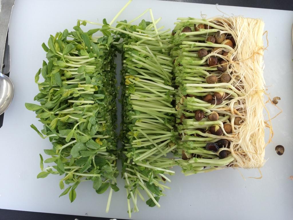 竹の子と豆苗と豚肉の玉子炒め:手順0